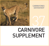 Zero Carb – The Carnivore Diet